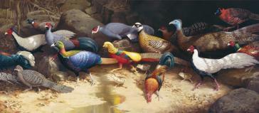 The Pheasant Run by William T Cooper