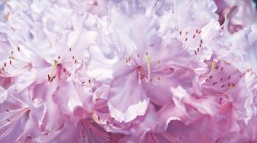 Transcending Grace by Lyn Diefenbach