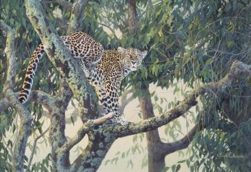 Queen Of The Treetops by Lyn Ellison