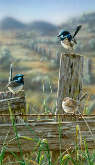 Sideline by Greg Postle