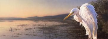 Sunlander by Greg Postle
