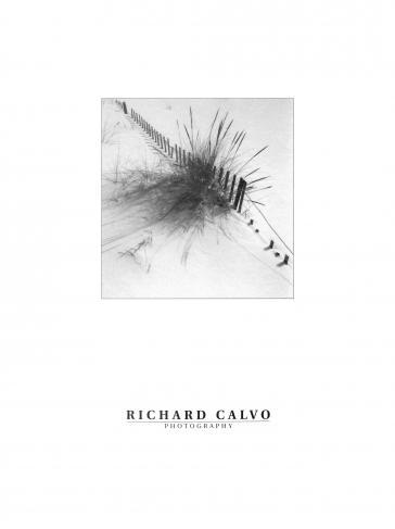 Winter Celebration by Richard Calvo