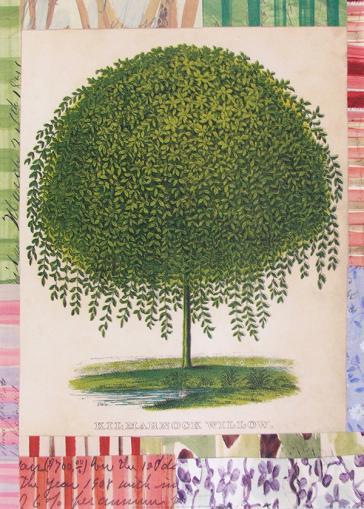 Kilmarnock Willow by John Derian