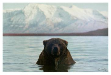 Coastal Brown Bear by Kennan Ward