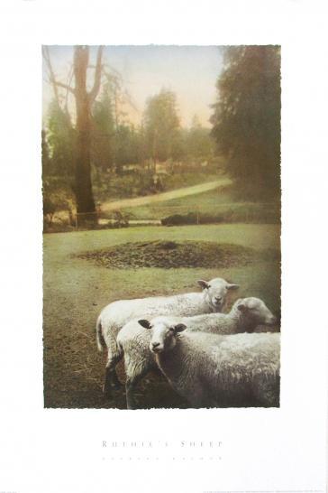 Ruthie's Sheep by Barbara Kalhor