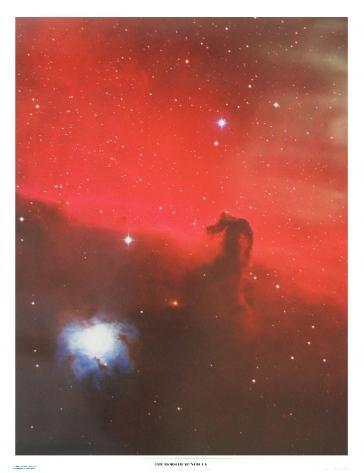 The Horsehead Nebula by David Malin