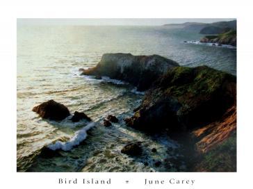 Bird Island by June Carey