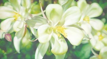 Enchanted Garden by Lyn Diefenbach