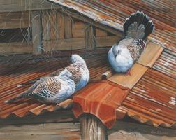 Pigeon Harmony by Lyn Ellison