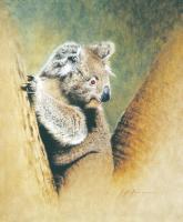 Koala by Krystii Melaine