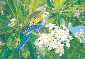 Parrot Of Paradise by Krystii Melaine