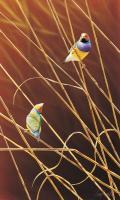 Northern Gems by Greg Postle