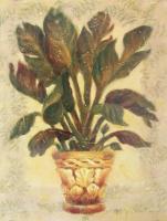 Banana Palm by Shari White