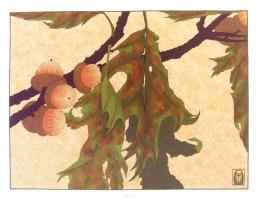 Pin Oak by Anita Munman