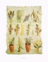 Herbs by Clare Sprawson