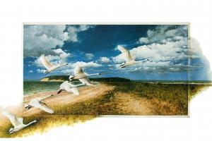 Swans by Vito De Vito
