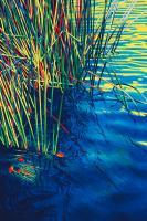 Blue Haven by Susan Schmidt